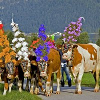6 tradiții austriece unice
