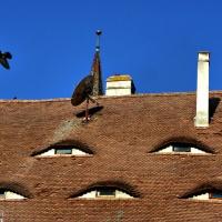 Povești din Sibiu. Ochii orașului